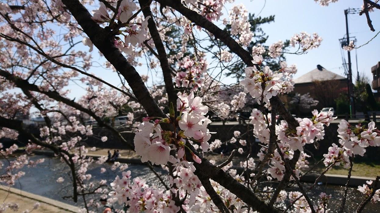 お花見に出かけたら、やっぱり反動が 離脱症状の残る私の体調のキロク