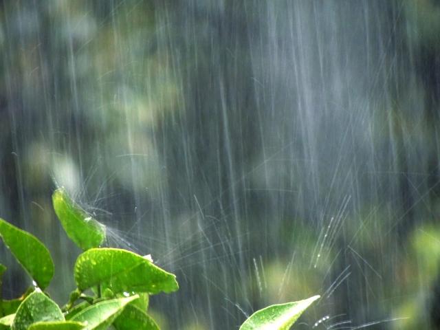 梅雨入り前に、すでに身体は梅雨モード【ベンゾジアゼピン一気断薬から3年1ヶ月経過】