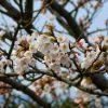 あれ?春の陽気なのに・・・【ベンゾジアゼピン一気断薬から2年11ヶ月】】